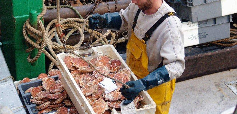 Pêche à la coquille Saint-Jacques: appel passé aux Ministres
